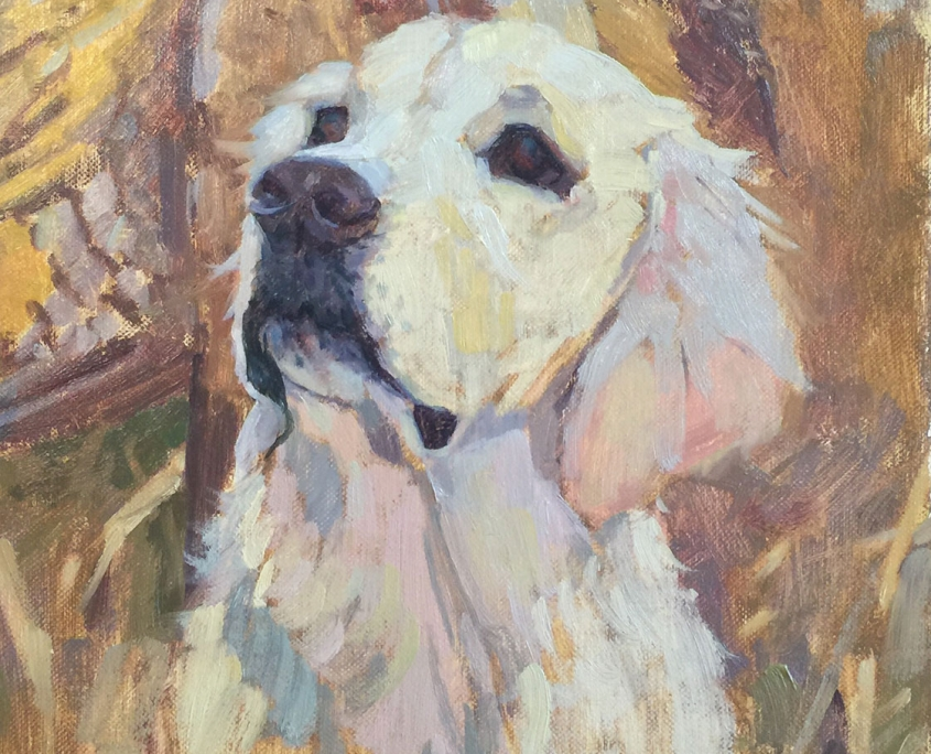 Portrait of a Hunting Dog, Scout