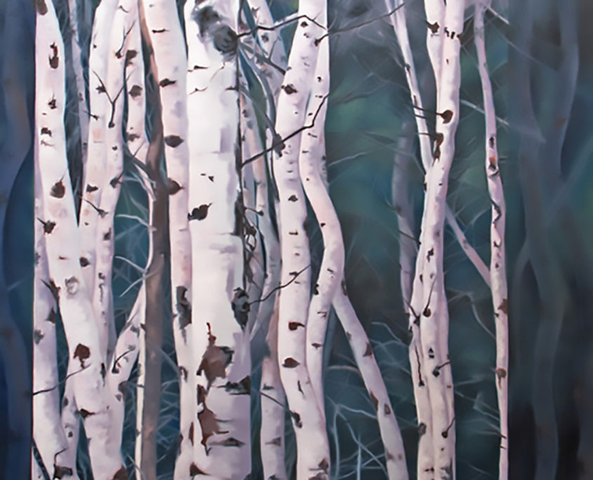 crowded aspen forest