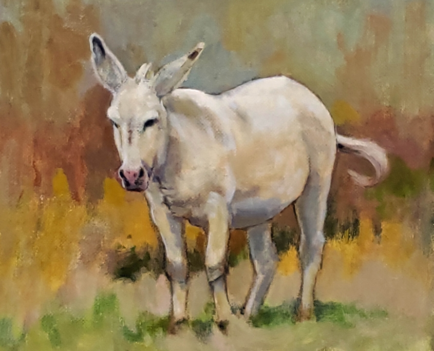 White Burro